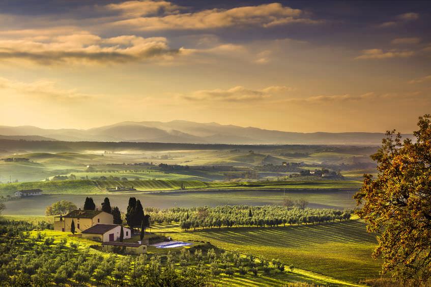 Olive Oil Tours Go From Farm To Bottle Olivebiz