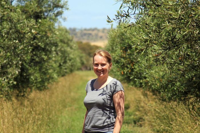 Tree change for UK doctor rooted in Tasmanian olive grove