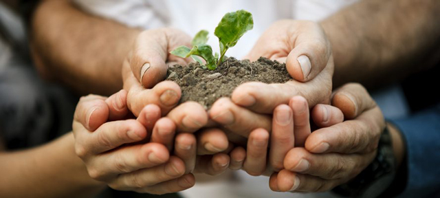 Research and Development Corporations to strengthen plant biosecurity