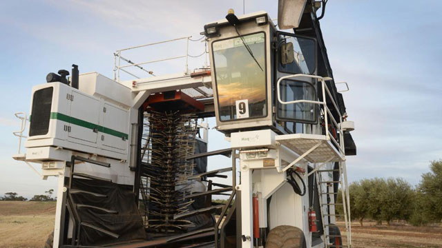 Colossus XL: Makes olive oil harvest a breeze