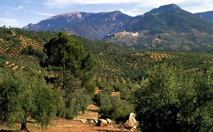 Britain's favourite imports under threat as Spanish heatwave impacts olive groves and vineyards