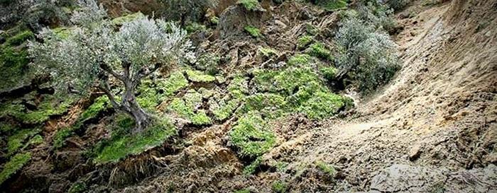 Landslide in Western Greece sweeps olive trees away