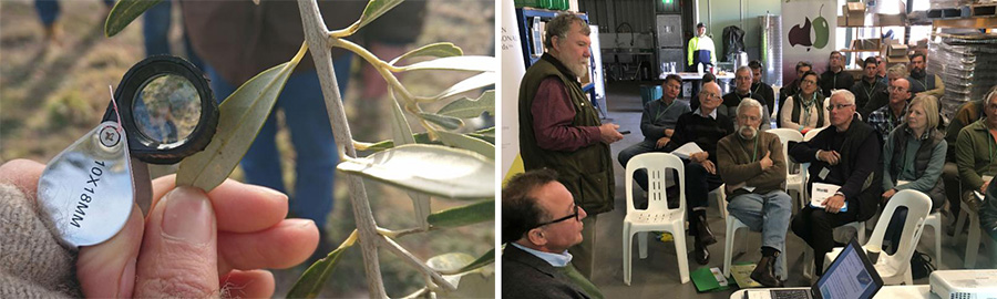 Final round of IPDM Field Days: don't miss the chance to learn how to protect your grove