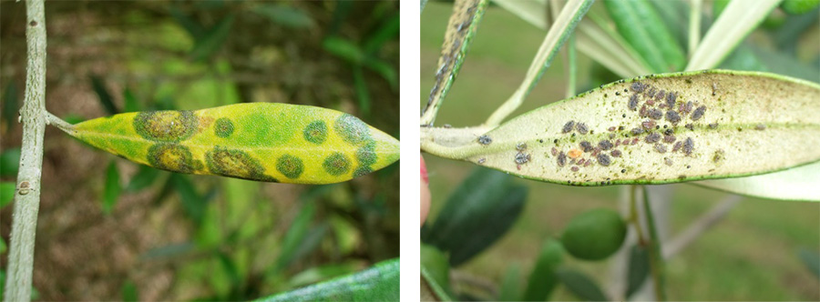 Share your pest and disease experiences for the 2020 Strategic Agrichemical Review Process