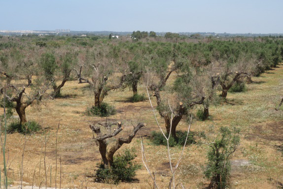 Update on Xylella research